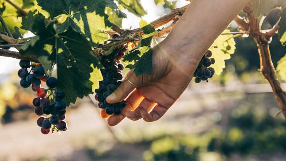 Wine Tasting, Virtually